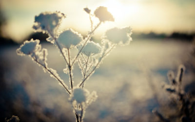 Calendar of the Soul: January 24-30, 2021
